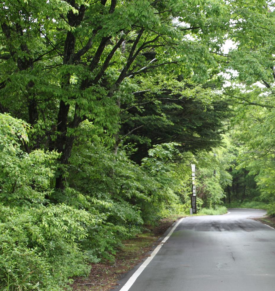 浅間高原の新緑