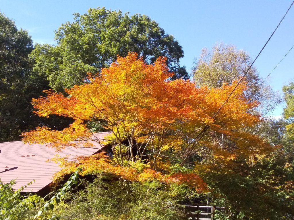 ちょっぴり赤く色づいた紅葉