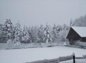 ウルベビレッジ積雪(朝一番の様子)